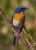 Oiseau de Bharatpur