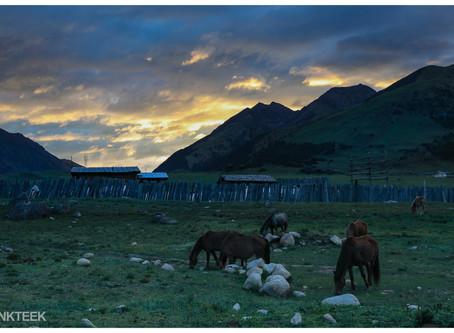 Lustige Tiererlebnisse in Tibet