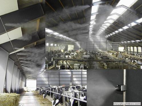 cattlemisting.jpg