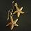 Baby Starfish earrings