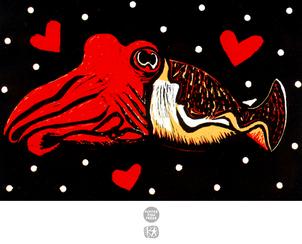 Cephalopod Love (Cuttlefish)