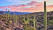portada-Desert.jpg