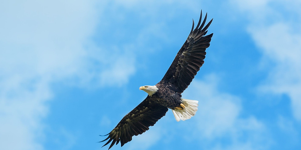 Eagle Alchemy with Guest Practitioner, James Philip