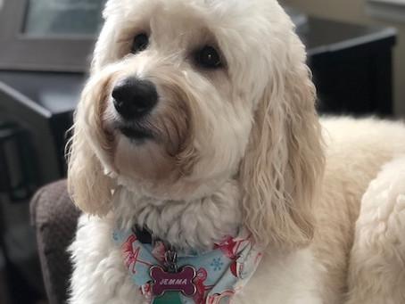 8 Puppies Confirmed!