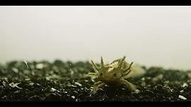 Now I am an Axolotl.jpg