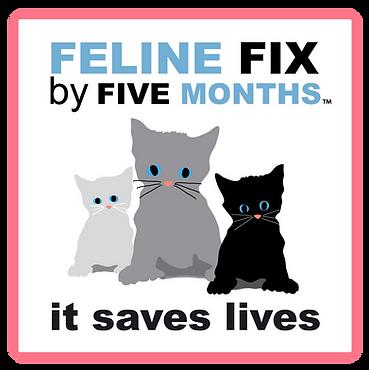 Felinefixbyfive.PNG