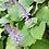 Thumbnail: Reuma planten