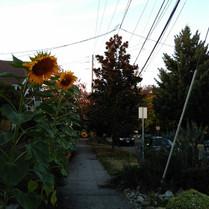 Seattle neighbourhood