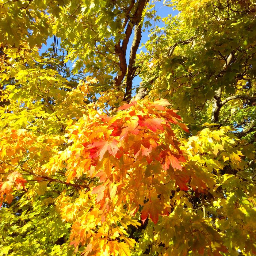 Autumn Time!
