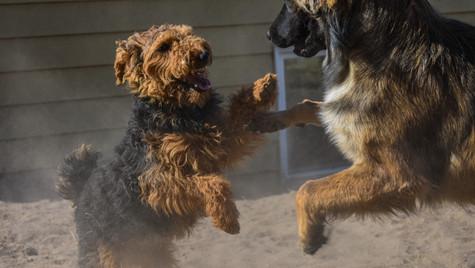 Maisie + Bailey