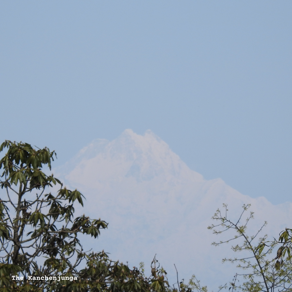 A beautiful view of the majestic, snow-clad Kanchenjunga
