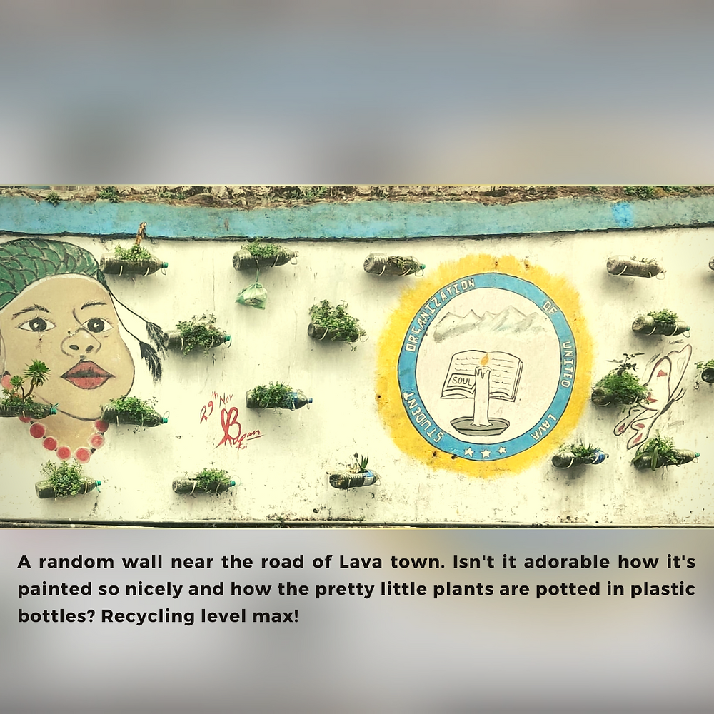 A wall in Lava town, painted with the face of a woman and a symbol for education. Dotted throughout the wall are little plants, kept in plastic bottles