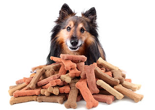 Dog Treats Grain Free