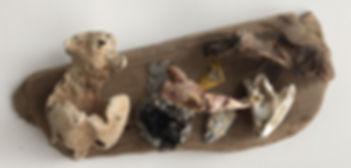 Bubba beach finds on driftwood
