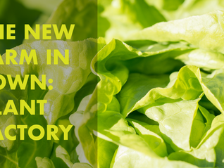 The New Farm in Town – Plant Factory