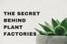 The Secret Behind Plant Factories