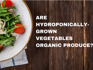 Are Hydroponically-Grown Vegetables Organic Produce?