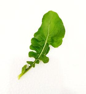 Rocket Eruca Sativa Lettuce
