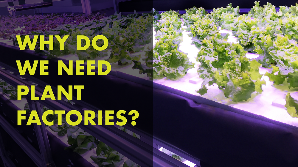 Why Do We Need Plant Factories? - Vegetory Blog