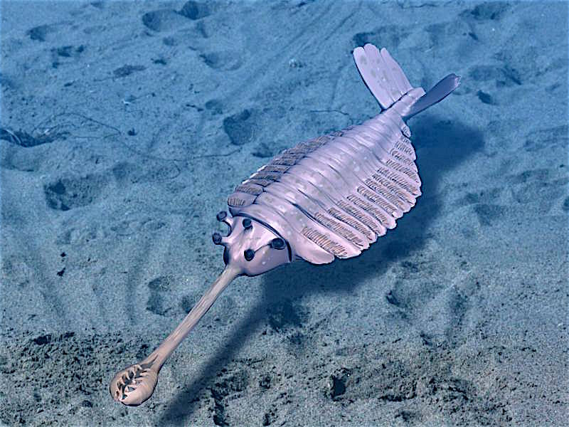 A Cambrian Moment in Space is Near