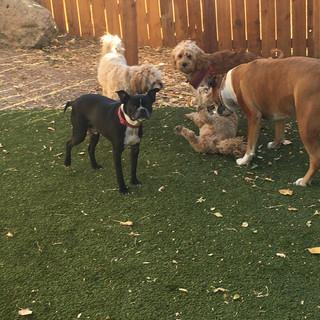 Even the turf yard is loads of fun!
