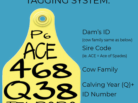 Understanding the Common USA Numbering System
