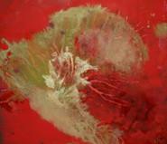 Coral Fragility
