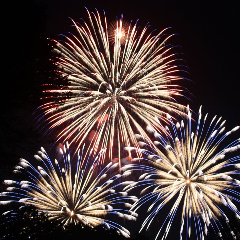 CBD Dog Fireworks