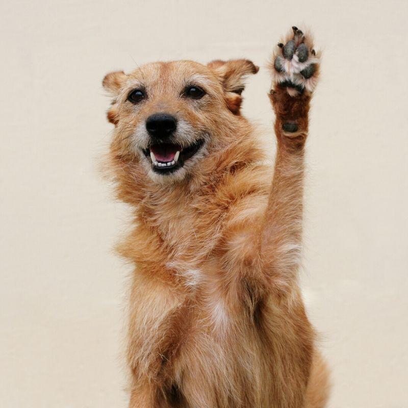 CBD salve for dogs