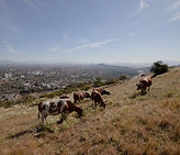 5_Cerro-Alvarado.jpg