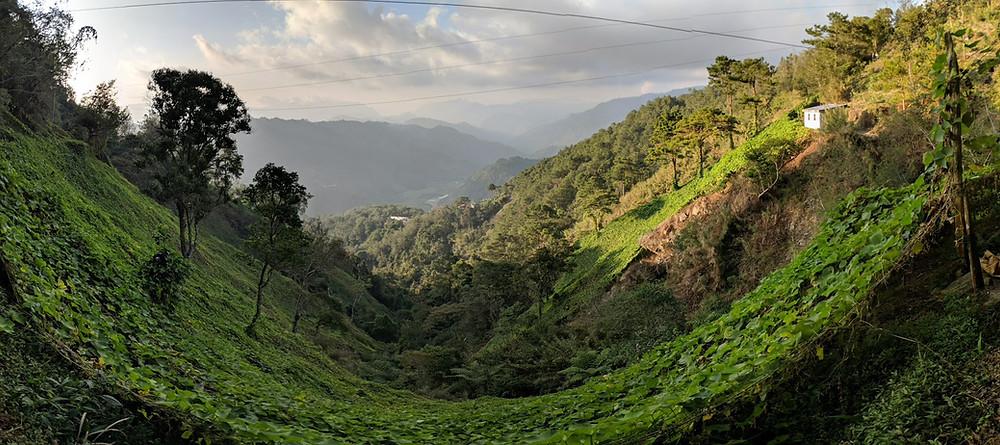 Kai Analytics - Baguio and the Kalsada Coffee Company