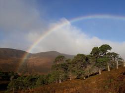 Glen Derry, Cairngorms