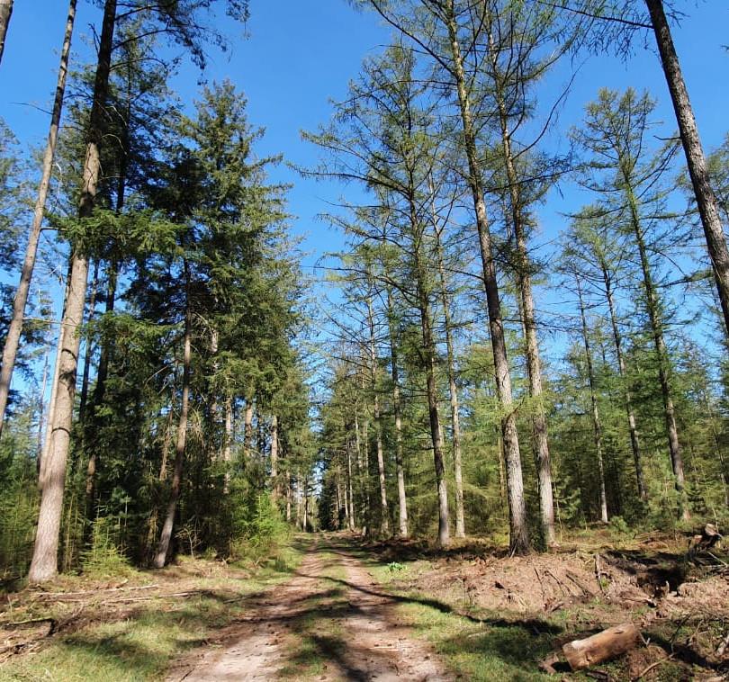 Vierhouterbos-Vierhouten-Natuurbeleving