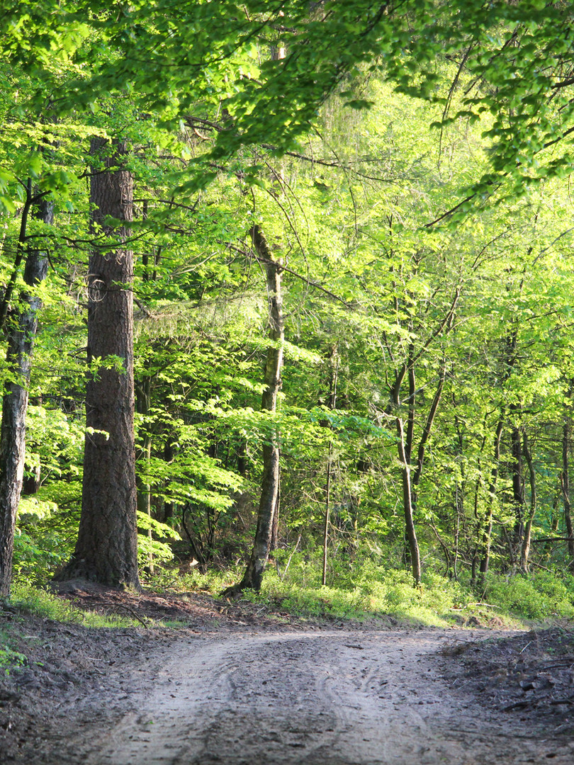 natuur-vierhouterbos-vierhouten.jpg