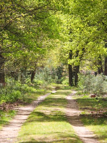 natuur-vierhouten-vierhouterbos.jpg