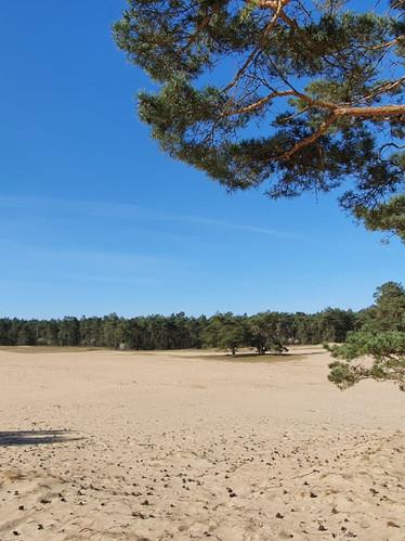 Zandverstuiving-Hulshorst-Vierhouten.jpg
