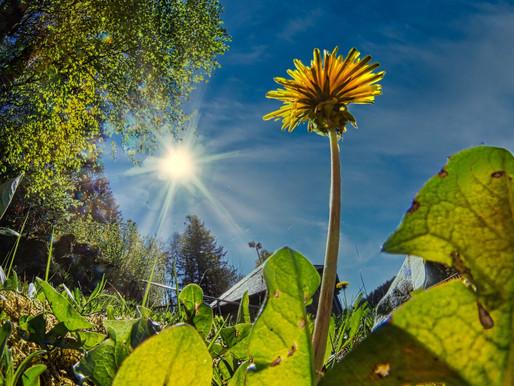 Foto des Tages - Sonnensterne