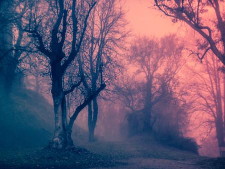 Foto des Tages - Foggy Morning