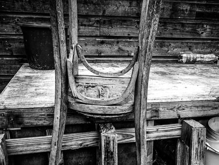 Foto des Tages - Stuhl-Leben