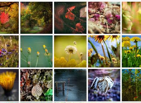 "Mein Photo Shop - Galerie ""Natur"""