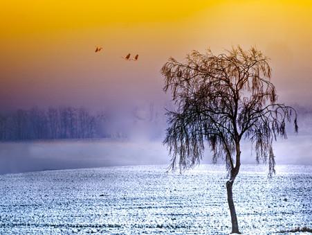 Sometimes In Winter