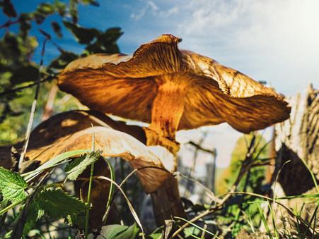 Foto des Tages - Pilzzeit