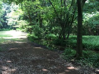 うきうき散歩
