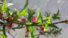 Frühlingsbild.jpg