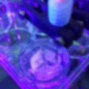 bioprinter.jpg