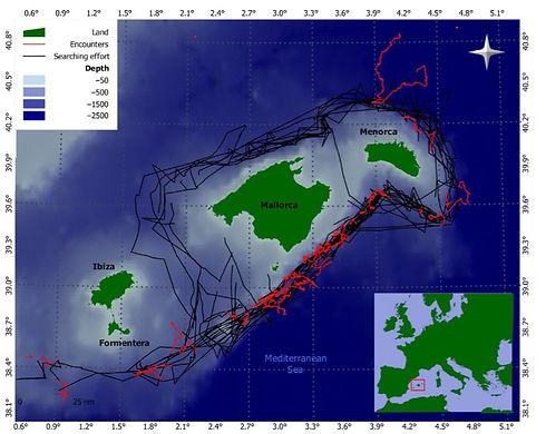 mapa cachalotes.jpg