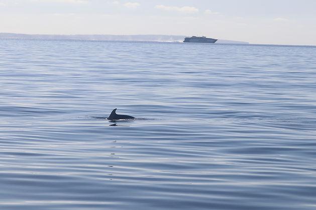 Delfines 3.JPG