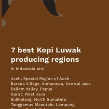 KOPI+11+-+LUWAK+01+-+LOW.jpg