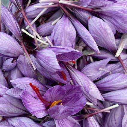 Kentish Saffron