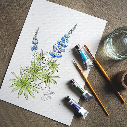 Botanical Illustration & Watercolours Workshop